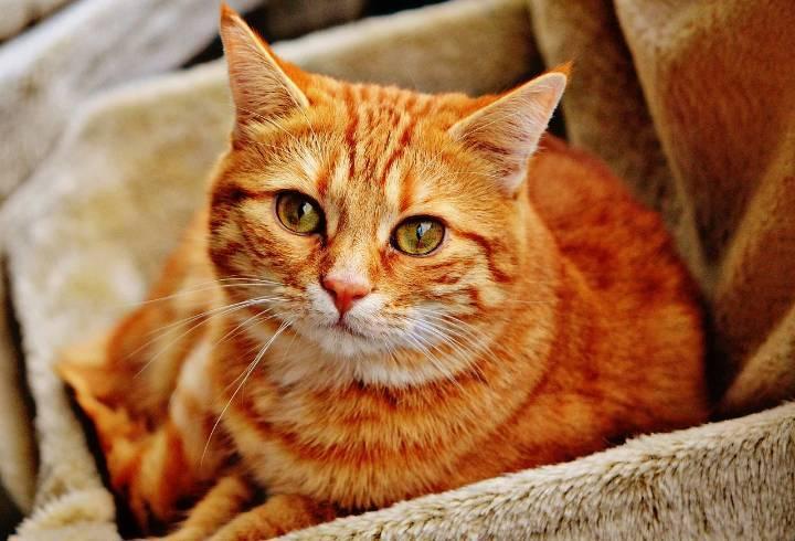Петербуржцы пожаловались на убийцу котов