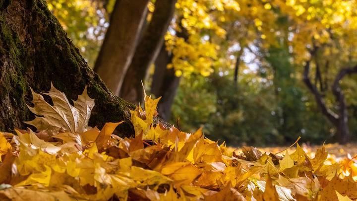 Аллерголог рассказал об опасности опавшей листвы