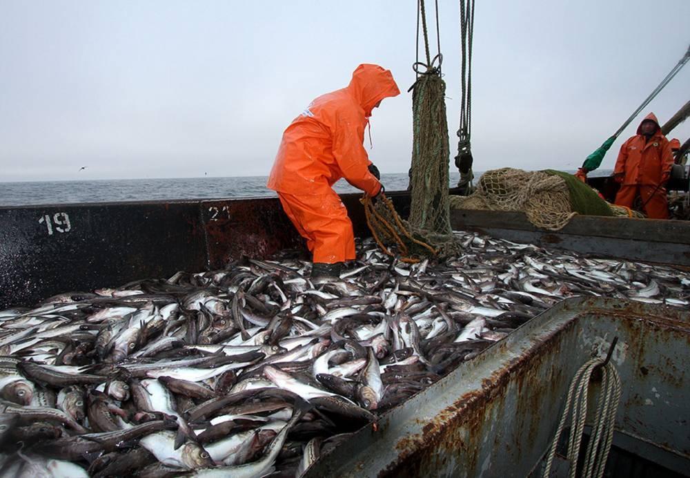Беларусь сможет добывать рыбу в северных морях России