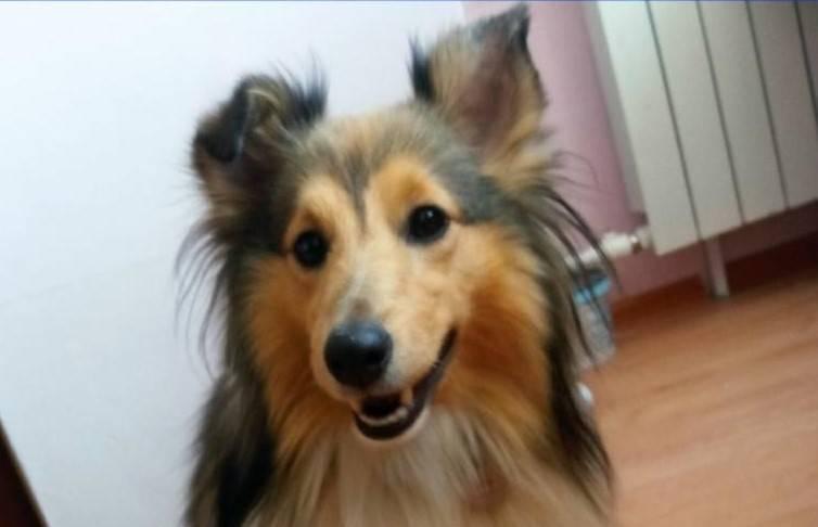 В Волгограде кондуктор автобуса разбила телефон 16-летней девушке из-за собаки