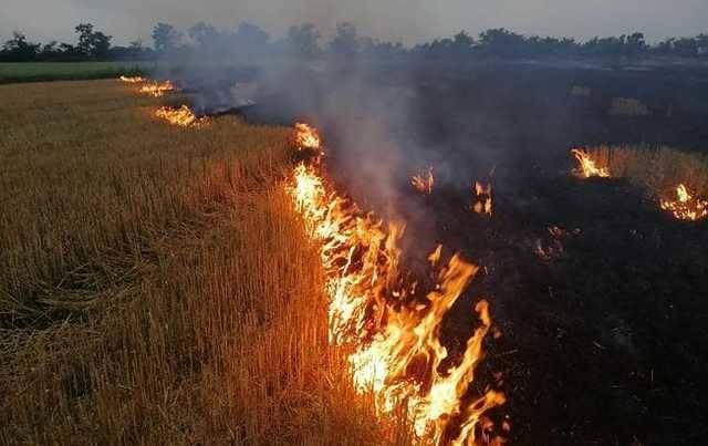 В Украине в ближайшие дни сохранится чрезвычайная пожарная опасность