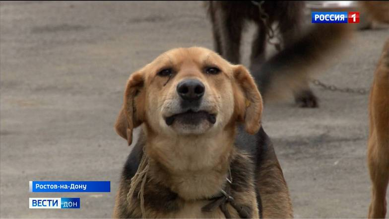 Администрация Ростова прокомментировала ситуацию с бездомными собаками в городе