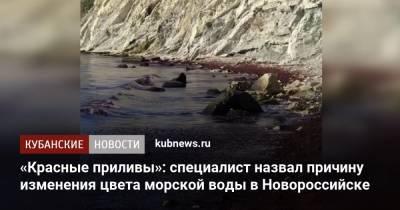 «Красные приливы»: специалист назвал причину изменения цвета морской воды в Новороссийске