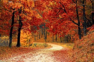 Тепло и температура до +24: погода в Украине 15 октября