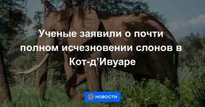 Ученые заявили о почти полном исчезновении слонов в Кот-д'Ивуаре