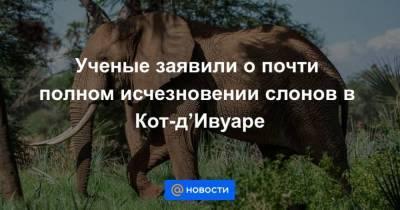 Ученые заявили о почти полном исчезновении слонов в Кот-дИвуаре