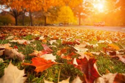 Впервые за 140 лет метеорологическое лето в Киеве закончилось в середине октября