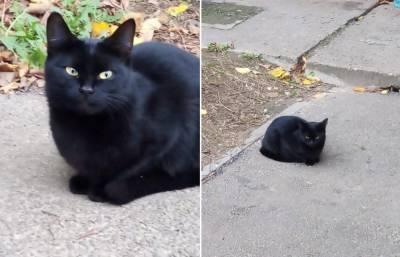 Жительница Твери услышала мяуканье закопанного кота и спасла его
