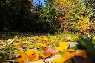 Волгоградцев 3 октября ожидает ясная погода при +23 °С