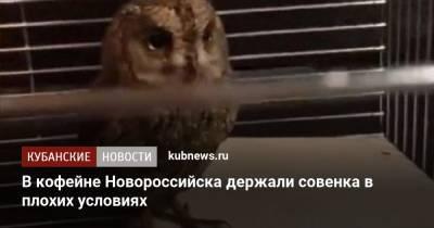 В кофейне Новороссийска держали совенка в плохих условиях