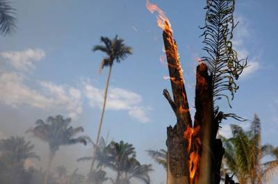 Болсонару заявил о готовности защищать Амазонию силой оружия