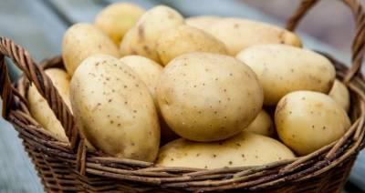 Беларусь уже не входит в Топ-10 производителей картофеля в мире