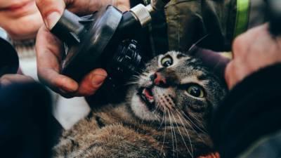 В Севастополе из пожара спасли 12 человек и 3 котов - фото и видео