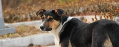 Губернатор Севастополя поручил проверить жалобу зоозащитников на «концлагерь для собак»