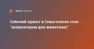 """Собачий приют в Севастополе стал """"концлагерем для животных"""""""
