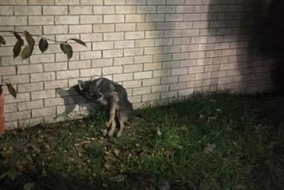 В Новороссийске из ливневки достали травмированную собаку