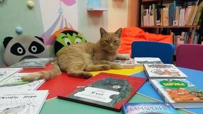 В Тверской области начали розыск убийц кота-библиотекаря