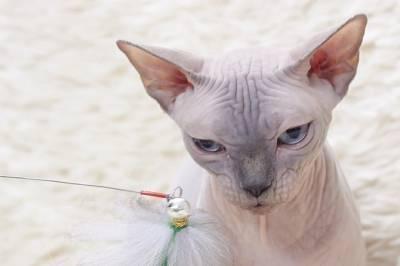 Хвостатый Брэд Питт, усатый Аффлек, полосатый Чехов: как россияне называют котов