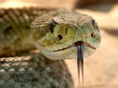 В Кривом Роге выловили змею, которая поселилась в шкафу – ГСЧС