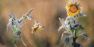 Украинцев предупредили о заморозках: какие регионы под ударом - ТЕЛЕГРАФ