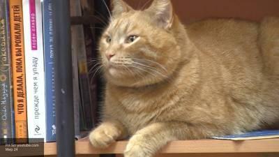Зооюрист боится, что убийца кота-библиотекаря из Твери избежит наказания