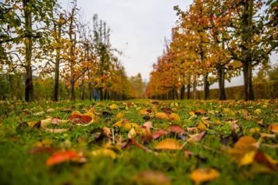 Синоптики рассказали, чего ожидать от погоды в октябре