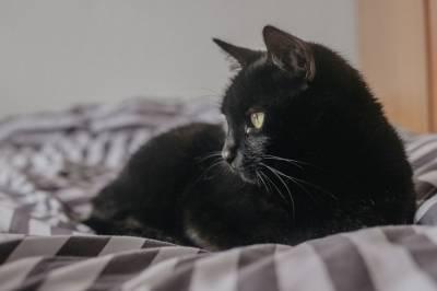 Петербуржские ученые обследовали зараженного COVID-19 домашнего кота
