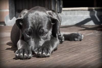 В Омске полицейские задержали мужчину, распилившего щенка