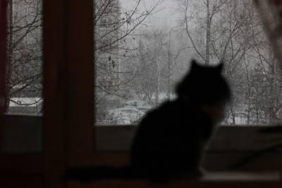 Москвичам рассказали о погоде в столице 17 января