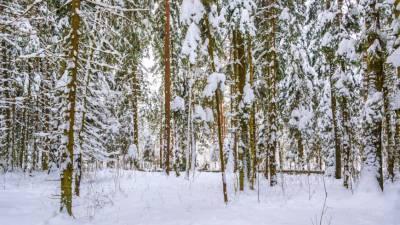 Метеорологи пообещали москвичам «дно холода»