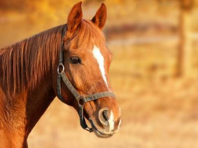 Стало известно, во сколько петербуржцам обходится конная прогулка