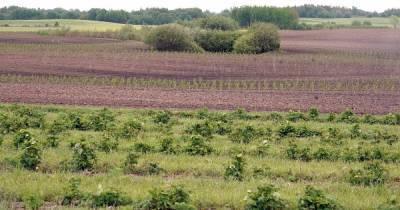 В Калининградской области в 2020 году расширилось производство ягод (инфографика)