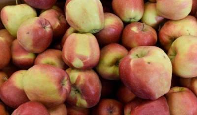 Польша пытается компенсировать потерю России для продажи яблок