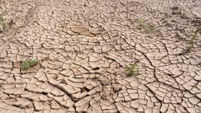 Погода летом 2021 года может быть аномально опасной - климатолог