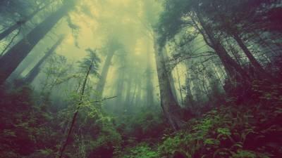 Убиравшиеся в лесу томские волонтеры обнаружили труп мужчины