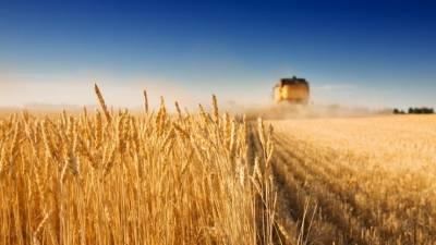 Путин поручил в течение 10 лет обеспечить аграриев российскими семенами на 75%