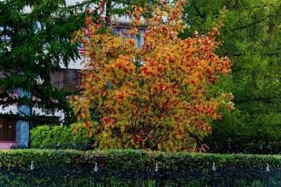 Переменную облачность и до +4 градусов ожидают синоптики в Томске 12 октября