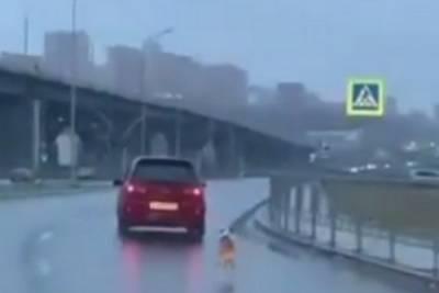 Девушка выбросила собаку из автомобиля в Красноярске