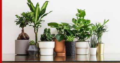 Какой горшок выбрать для комнатного растения: советы фитодизайнера