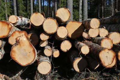 Лесопромышленники Баргузинского района Бурятии нарушают закон
