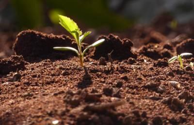 Россельхознадзором с начала года в Ярославской области отобрано для исследований 90 почвенных образцов