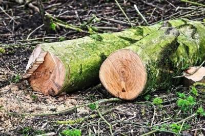 Жители Томска возмутились срубом деревьев в Академгородке Томска