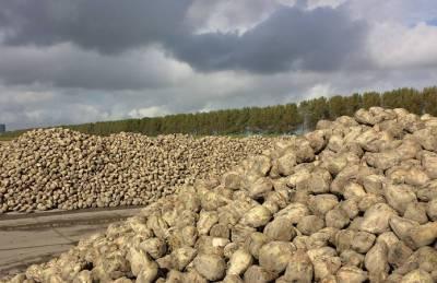 Сахарный сезон: заводы переработали почти 3 млн т сырья