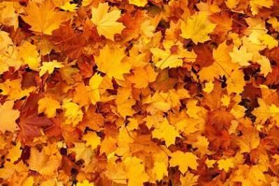 Названа опасность опавшей листвы для здоровья