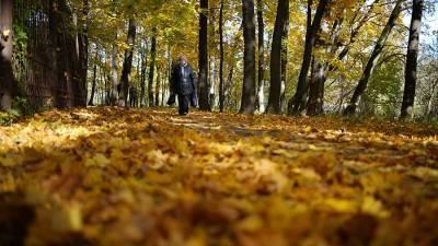 Врач рассказал об опасности опавшей листвы