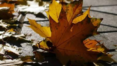Осенняя угроза: иммунолог предупредил об опасности опавших листьев