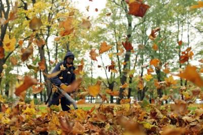 Иммунолог рассказал, чем опасна опавшая листва