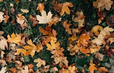 Врач рассказал, для кого осенняя листва может быть опасной