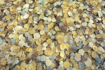 Иммунолог Болибок напомнил о вреде опавшей листвы для аллергиков