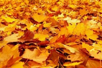 Врач рассказал, чем опасна опавшая листва